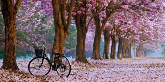 صور خلفيات جميلة سكايبي 201005795.jpg
